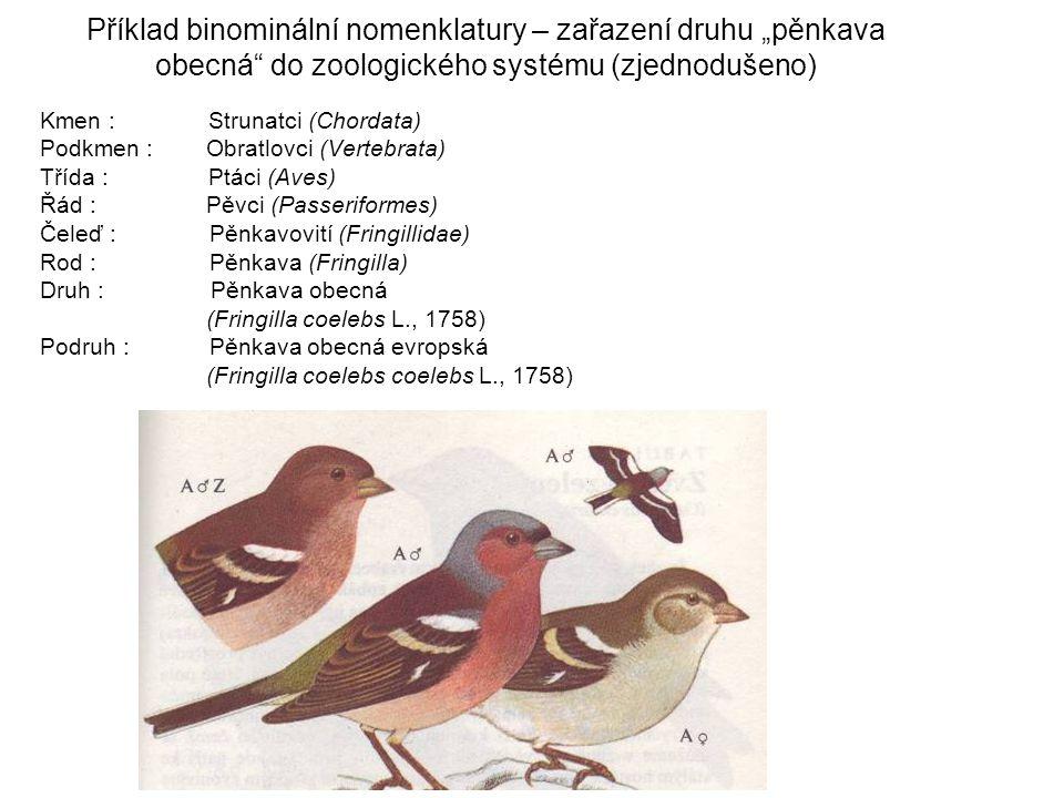"""Příklad binominální nomenklatury – zařazení druhu """"pěnkava obecná do zoologického systému (zjednodušeno)"""