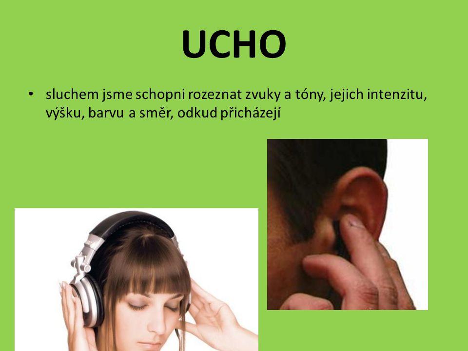 UCHO sluchem jsme schopni rozeznat zvuky a tóny, jejich intenzitu, výšku, barvu a směr, odkud přicházejí.