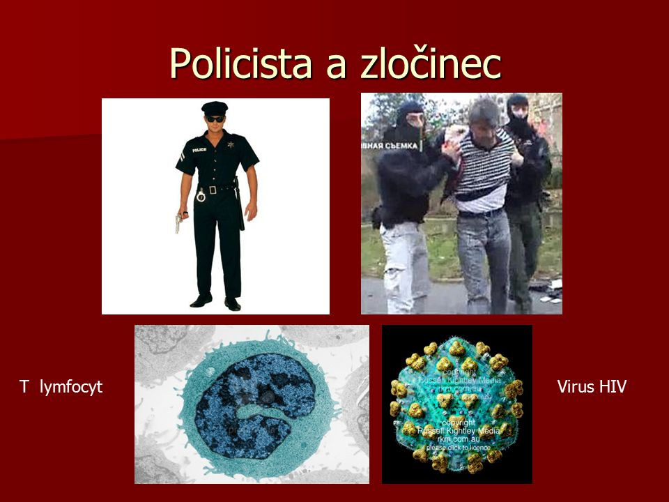 Policista a zločinec T lymfocyt Virus HIV