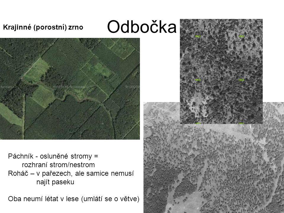 Odbočka Krajinné (porostní) zrno Páchník - osluněné stromy =