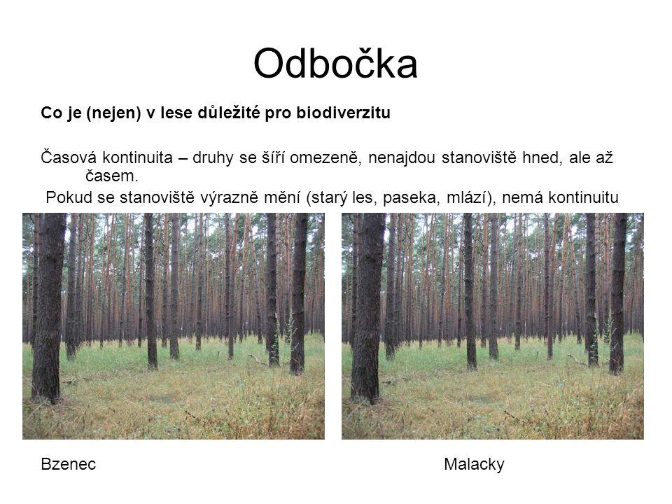 Odbočka Co je (nejen) v lese důležité pro biodiverzitu