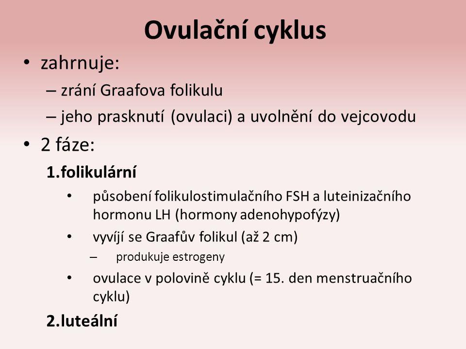 Ovulační cyklus zahrnuje: 2 fáze: zrání Graafova folikulu