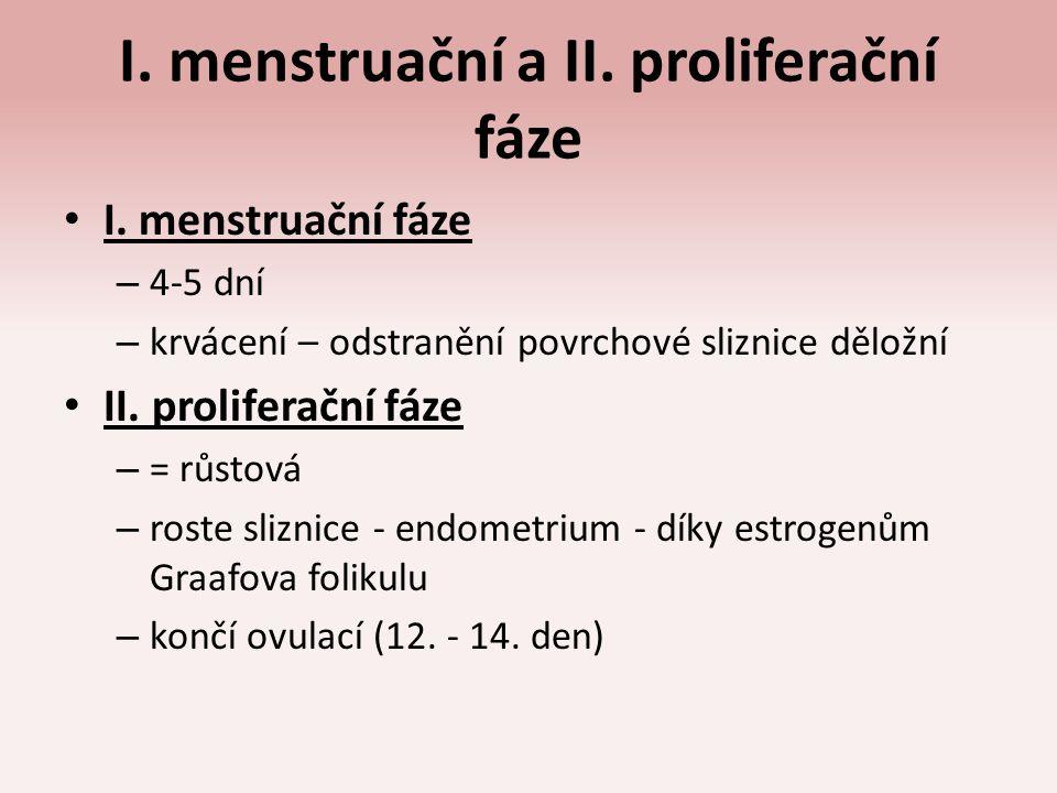 I. menstruační a II. proliferační fáze