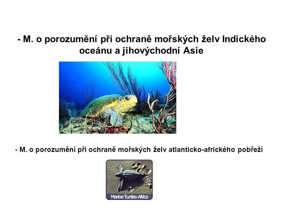 - M. o porozumění při ochraně mořských želv Indického oceánu a jihovýchodní Asie