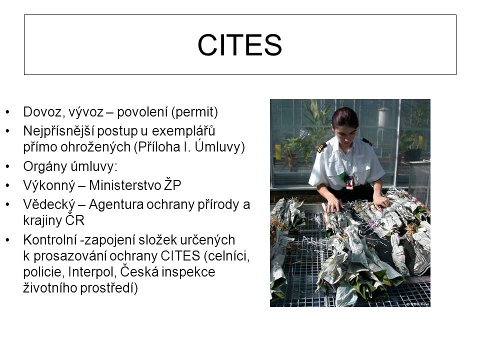 CITES Dovoz, vývoz – povolení (permit)