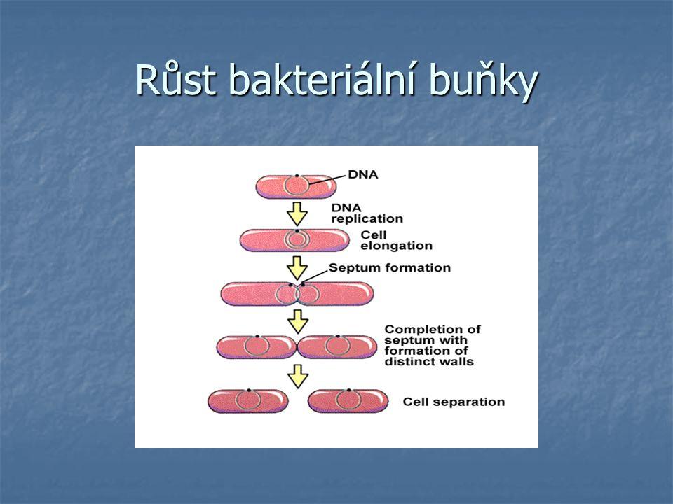 Růst bakteriální buňky