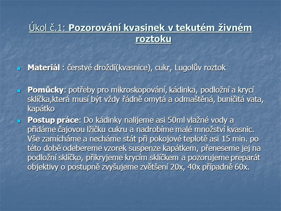Úkol č.1: Pozorování kvasinek v tekutém živném roztoku
