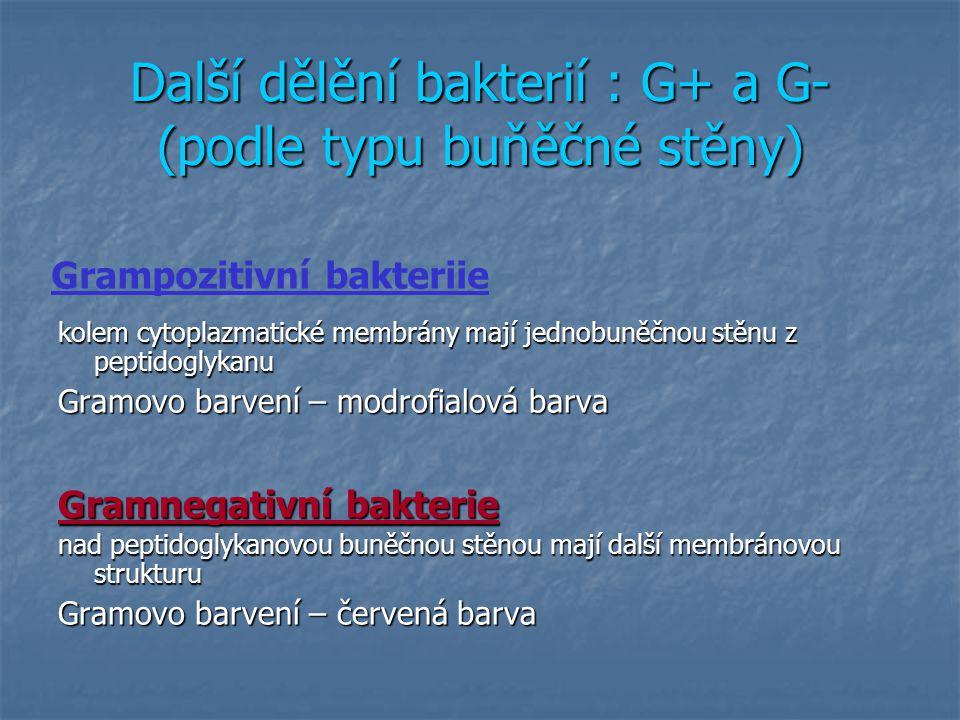 Další dělění bakterií : G+ a G- (podle typu buňěčné stěny)