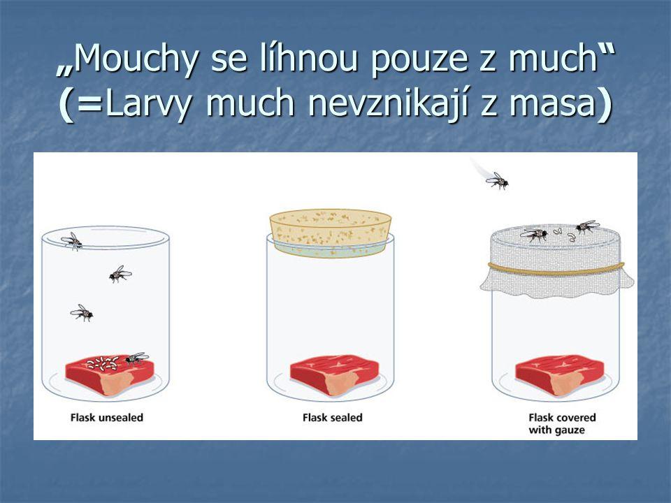 """""""Mouchy se líhnou pouze z much (=Larvy much nevznikají z masa)"""