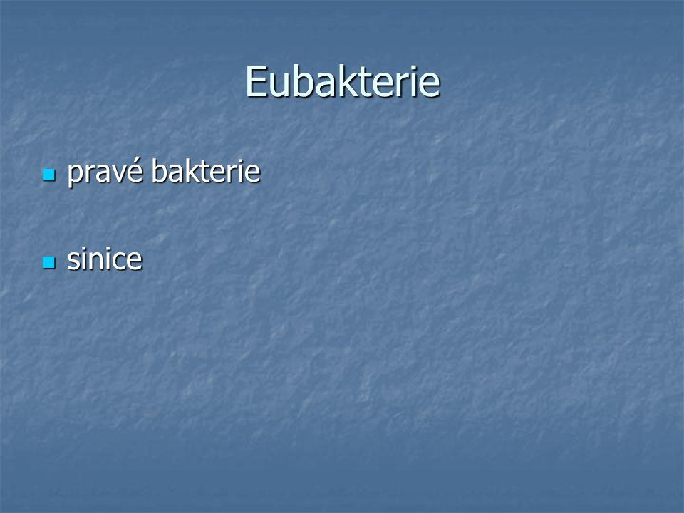 Eubakterie pravé bakterie sinice