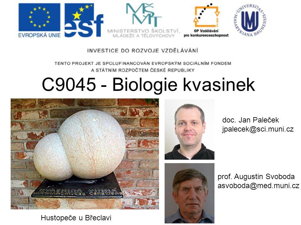 C9045 - Biologie kvasinek doc. Jan Paleček jpalecek@sci.muni.cz