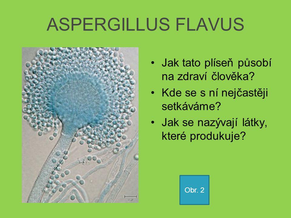 ASPERGILLUS FLAVUS Jak tato plíseň působí na zdraví člověka