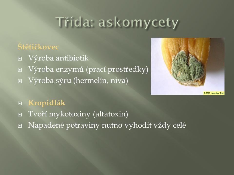 Třída: askomycety Štětičkovec Výroba antibiotik