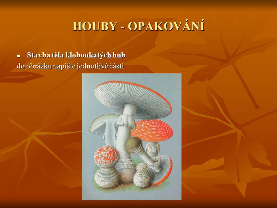 HOUBY - OPAKOVÁNÍ Stavba těla kloboukatých hub