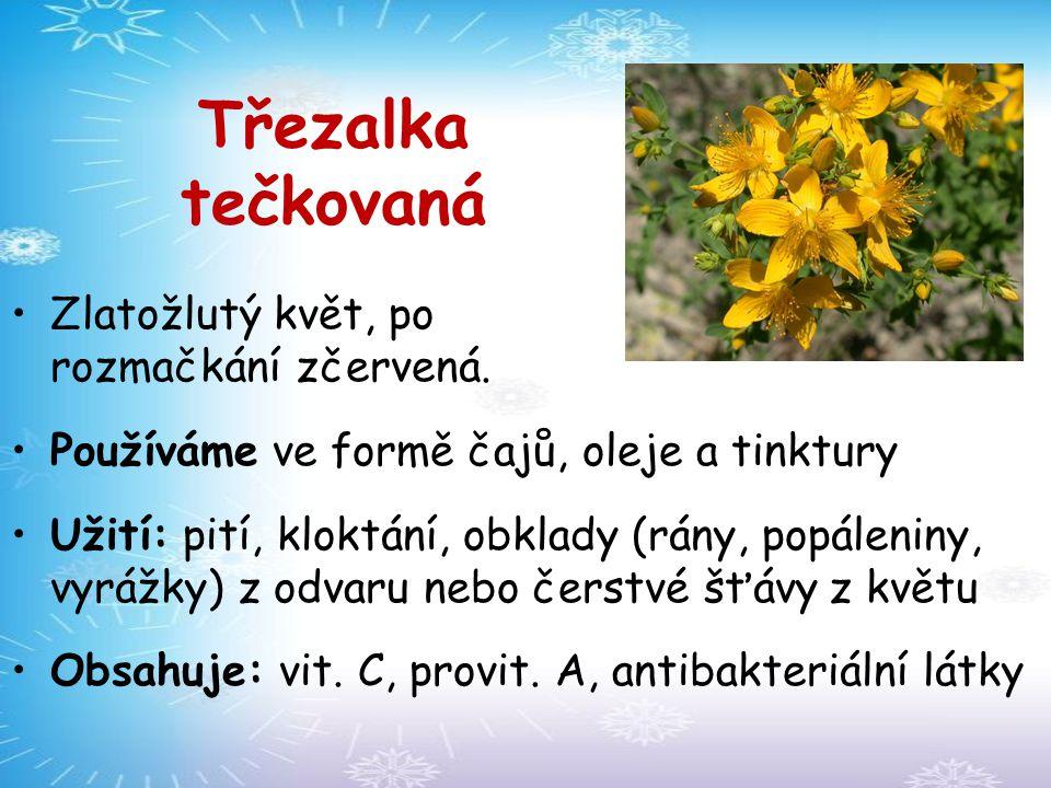 Třezalka tečkovaná Zlatožlutý květ, po rozmačkání zčervená.