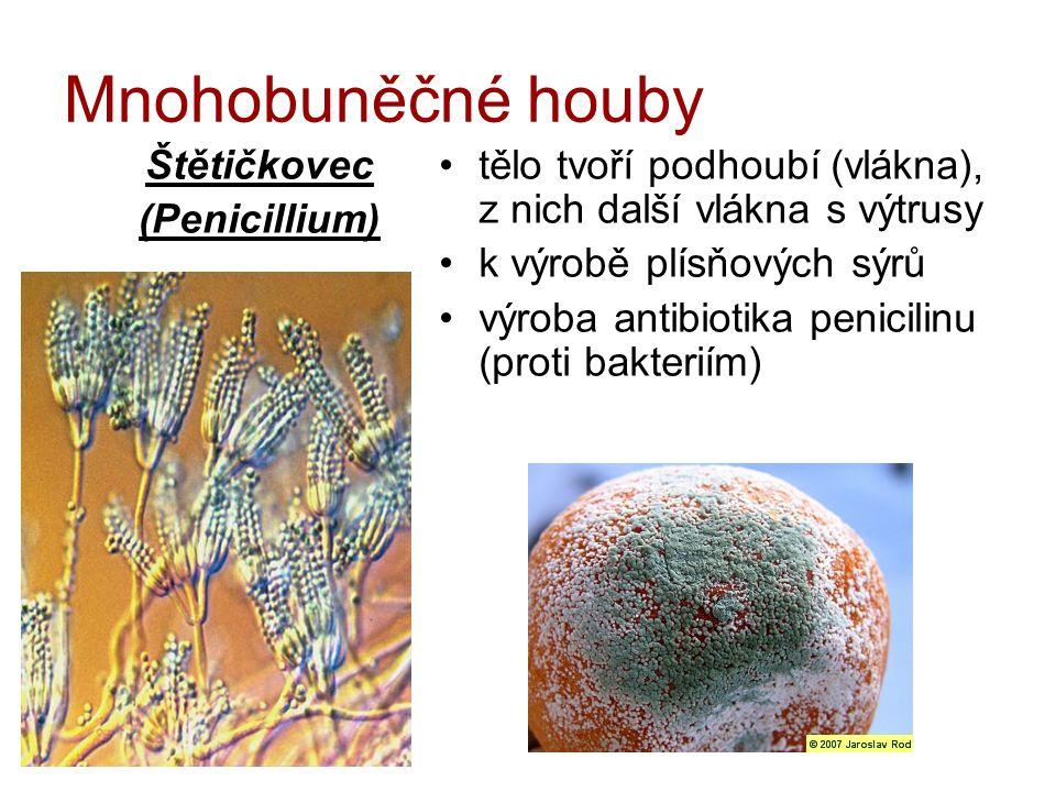 Mnohobuněčné houby Štětičkovec (Penicillium)