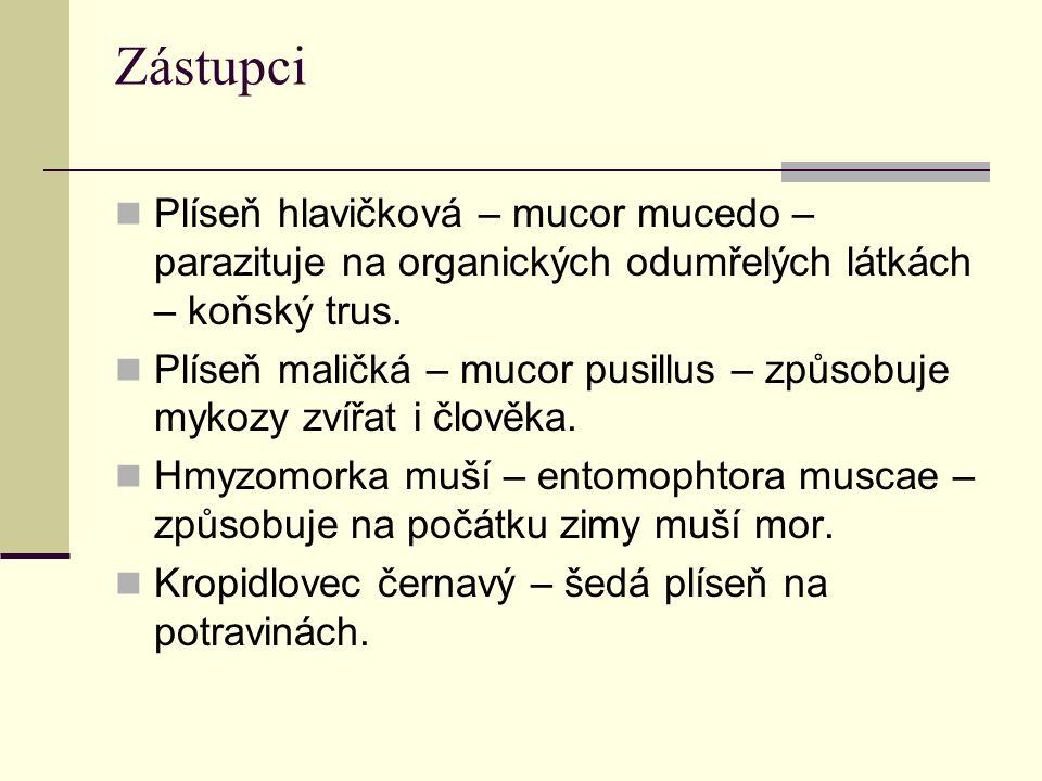 Zástupci Plíseň hlavičková – mucor mucedo – parazituje na organických odumřelých látkách – koňský trus.