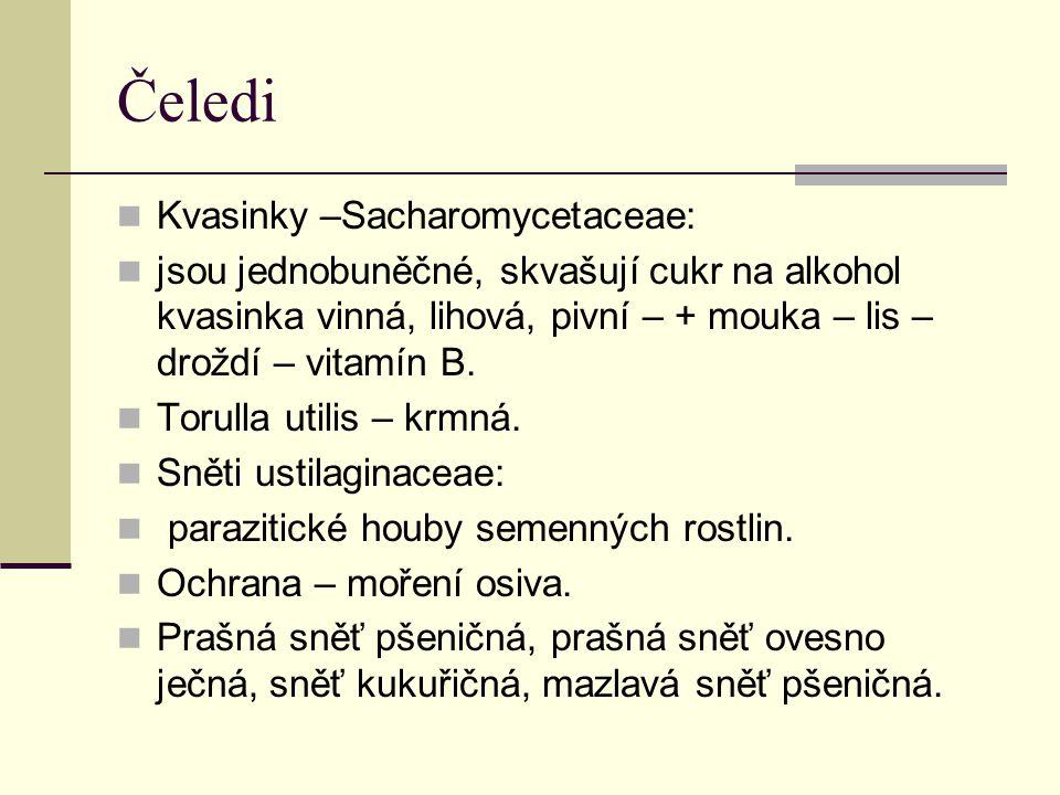 Čeledi Kvasinky –Sacharomycetaceae: