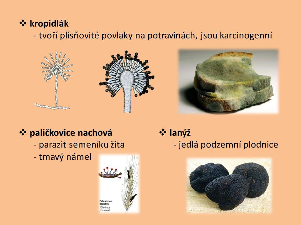 kropidlák - tvoří plísňovité povlaky na potravinách, jsou karcinogenní. paličkovice nachová. - parazit semeníku žita.