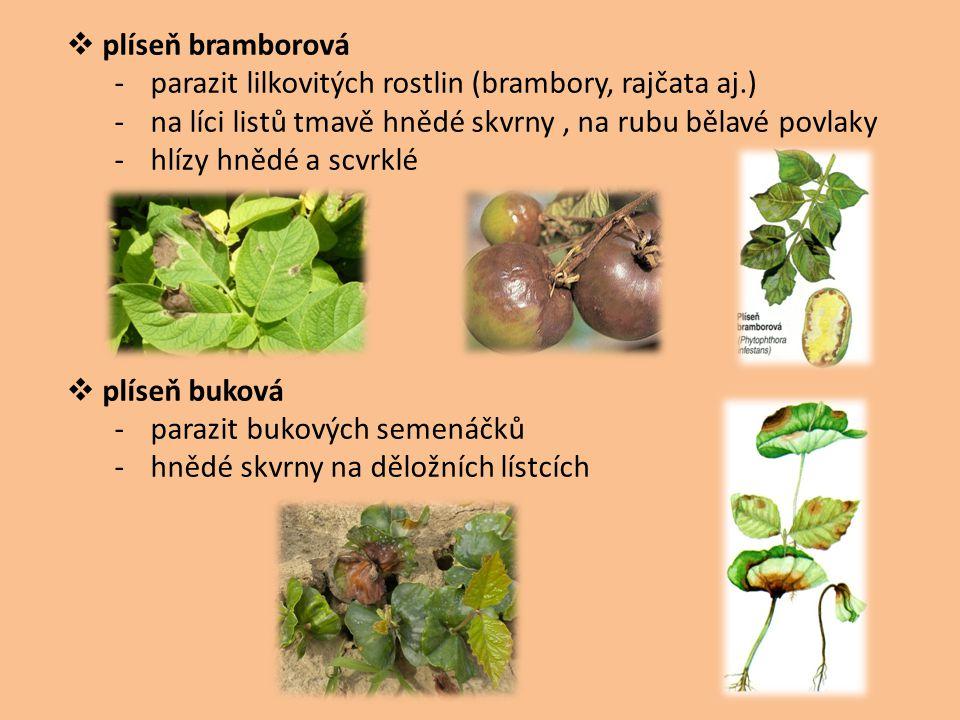 plíseň bramborová parazit lilkovitých rostlin (brambory, rajčata aj.) na líci listů tmavě hnědé skvrny , na rubu bělavé povlaky.