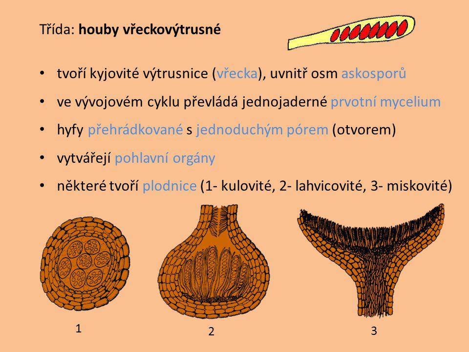 Třída: houby vřeckovýtrusné