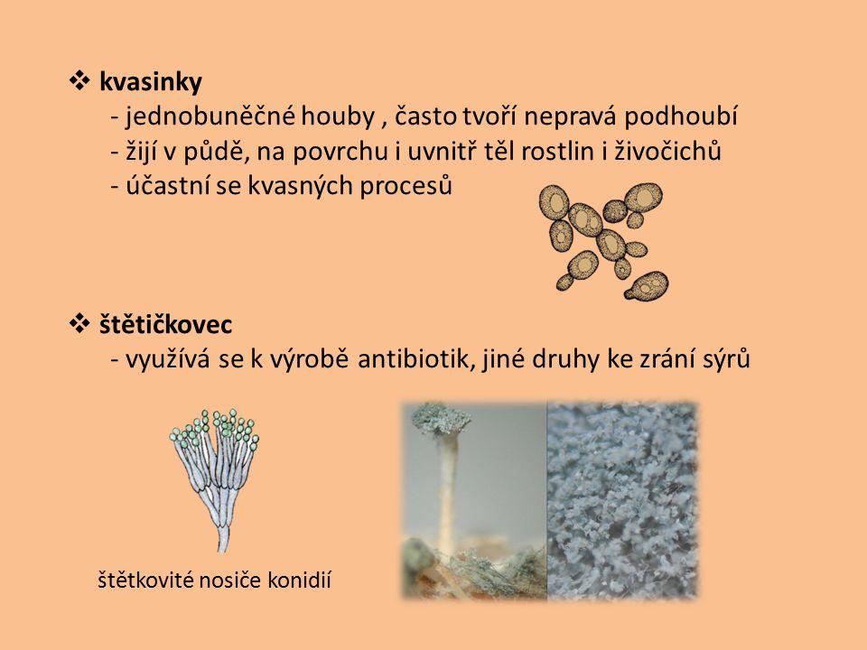 - jednobuněčné houby , často tvoří nepravá podhoubí