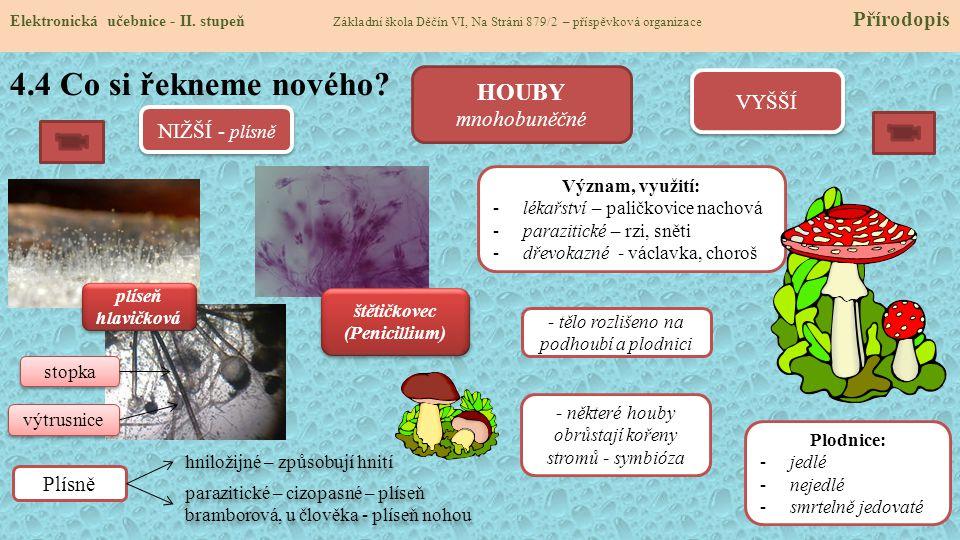 štětičkovec (Penicillium)