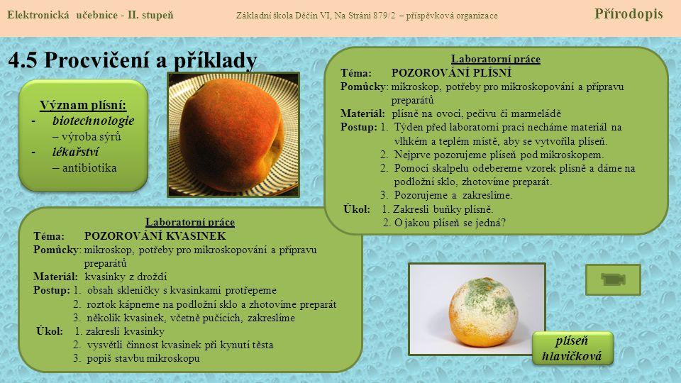 4.5 Procvičení a příklady Význam plísní: biotechnologie – výroba sýrů