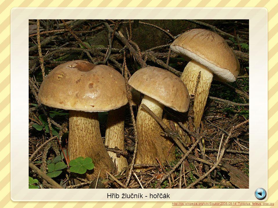Hřib žlučník - hořčák http://cs.wikipedia.org/wiki/Soubor:2006-09-14_Tylopilus_felleus_crop.jpg