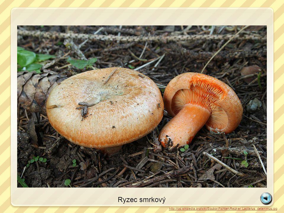 Ryzec smrkový http://cs.wikipedia.org/wiki/Soubor:Fichten-Reizker_Lactarius_deterrimus.jpg