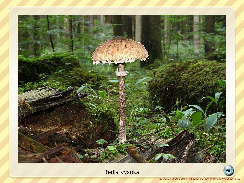 Bedla vysoká http://cs.wikipedia.org/wiki/Soubor:Parasol-Macrolepiota-procera.jpg