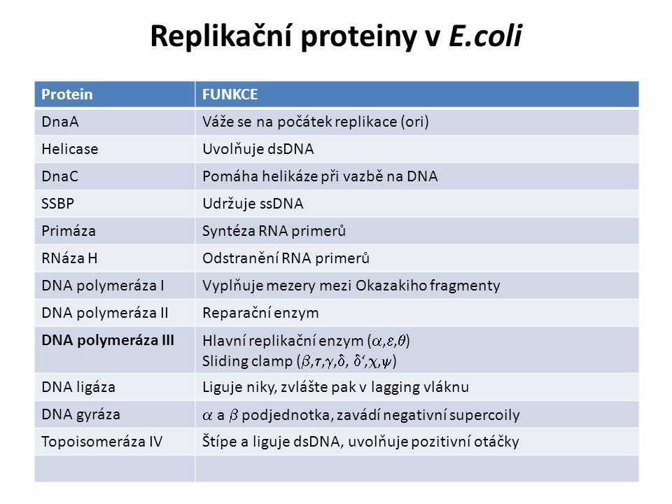Replikační proteiny v E.coli