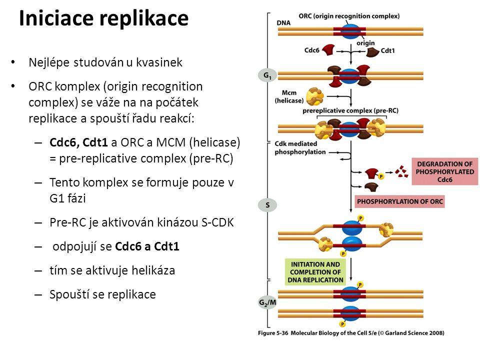 Iniciace replikace Nejlépe studován u kvasinek
