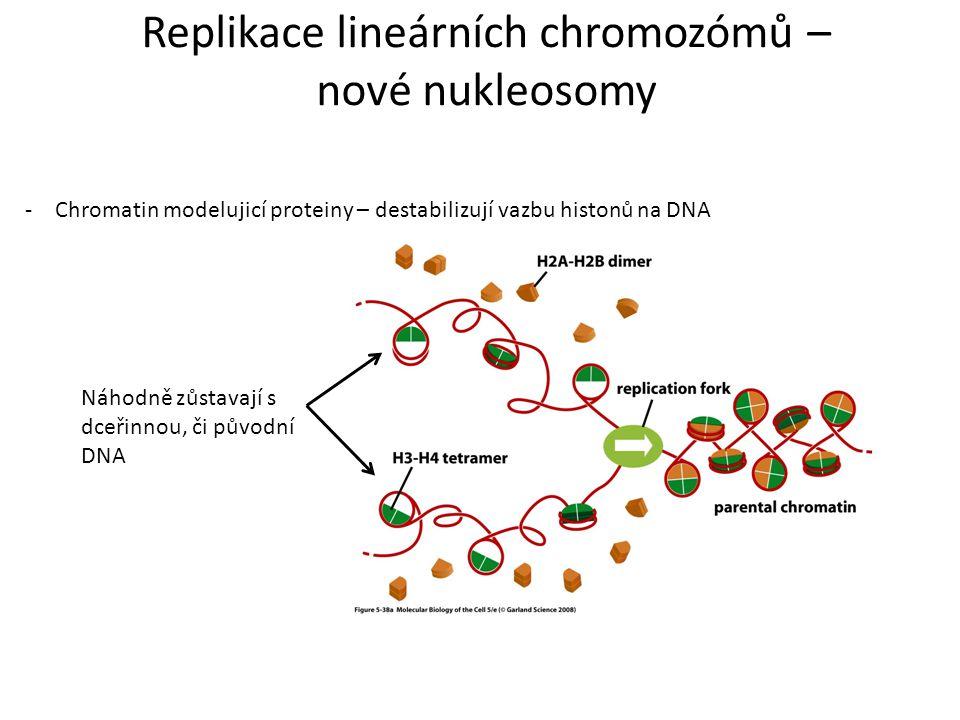 Replikace lineárních chromozómů –
