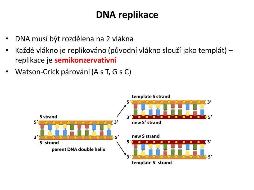 DNA replikace DNA musí být rozdělena na 2 vlákna