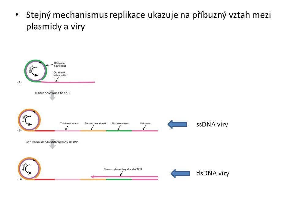 Stejný mechanismus replikace ukazuje na příbuzný vztah mezi plasmidy a viry
