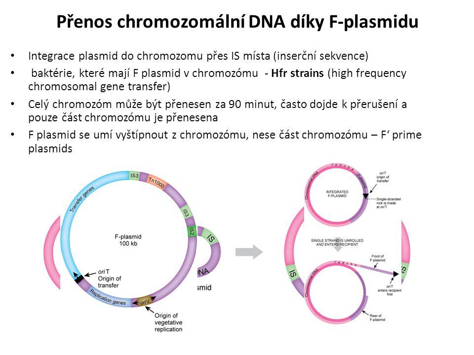 Přenos chromozomální DNA díky F-plasmidu