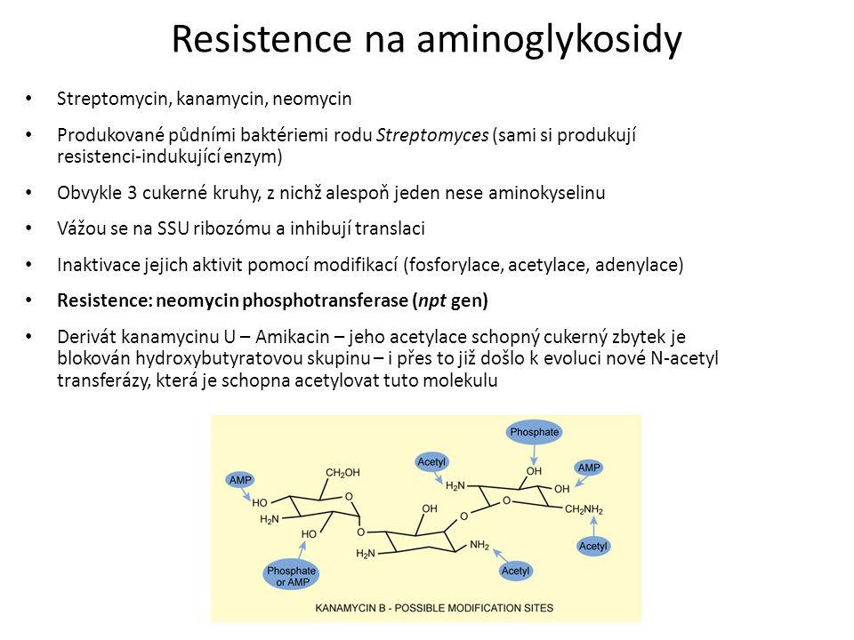 Resistence na aminoglykosidy