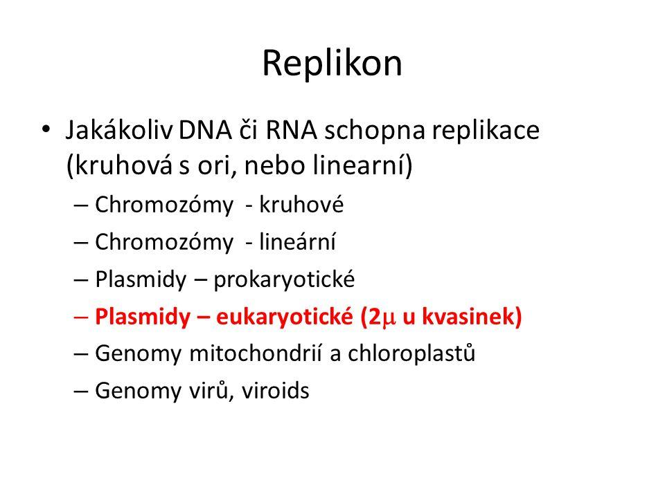 Replikon Jakákoliv DNA či RNA schopna replikace (kruhová s ori, nebo linearní) Chromozómy - kruhové.