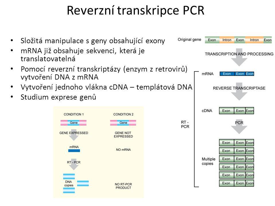 Reverzní transkripce PCR