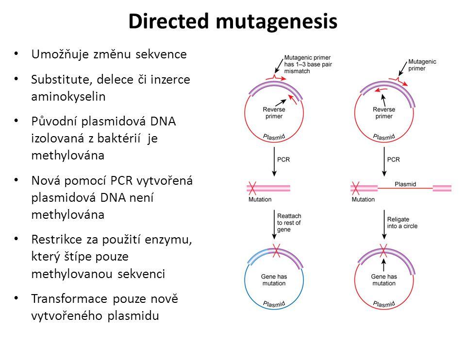 Directed mutagenesis Umožňuje změnu sekvence