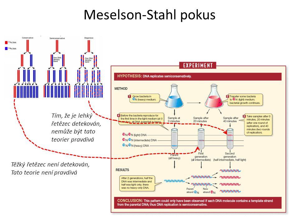 Meselson-Stahl pokus Tím, že je lehký řetězec detekován, nemůže být tato teorier pravdivá. Těžký řetězec není detekován,