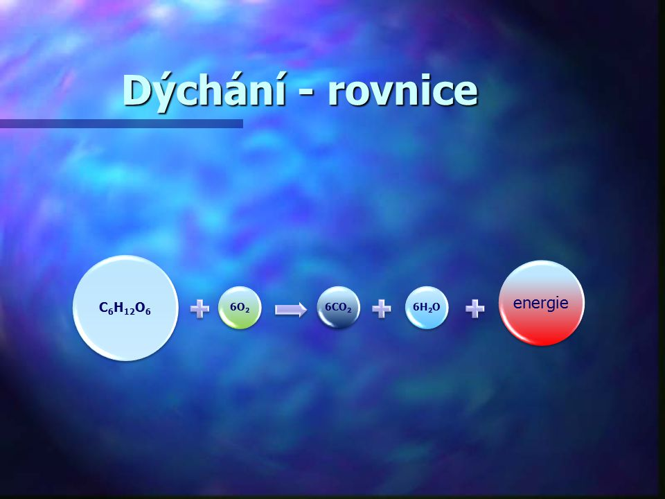 Dýchání - rovnice C6H12O6 6O2 6CO2 6H2O energie