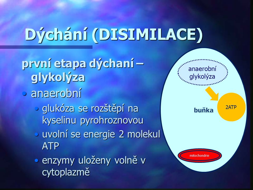 Dýchání (DISIMILACE) první etapa dýchaní – glykolýza anaerobní