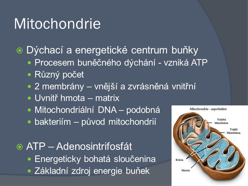 Mitochondrie Dýchací a energetické centrum buňky