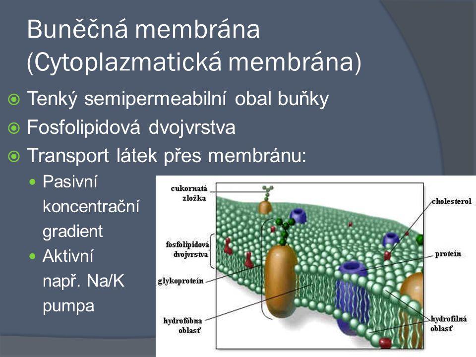 Buněčná membrána (Cytoplazmatická membrána)