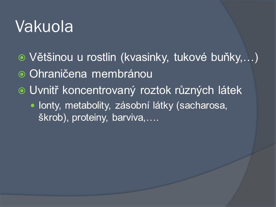 Vakuola Většinou u rostlin (kvasinky, tukové buňky,…)