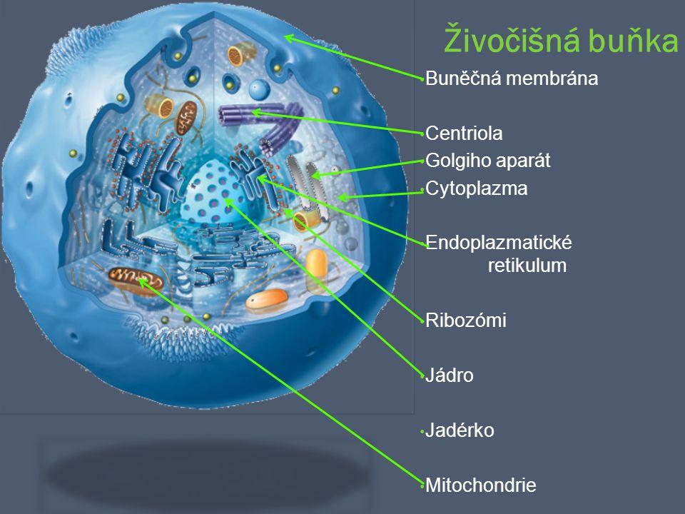 Živočišná buňka Buněčná membrána Centriola Golgiho aparát Cytoplazma