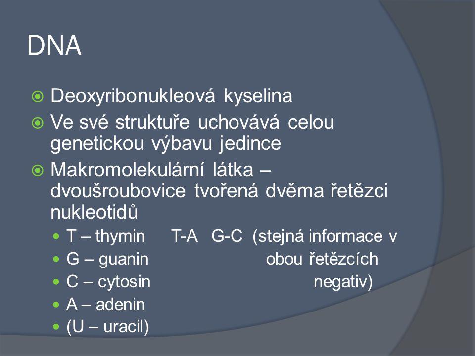 DNA Deoxyribonukleová kyselina