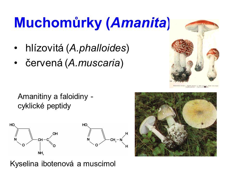 Muchomůrky (Amanita) hlízovitá (A.phalloides) červená (A.muscaria)